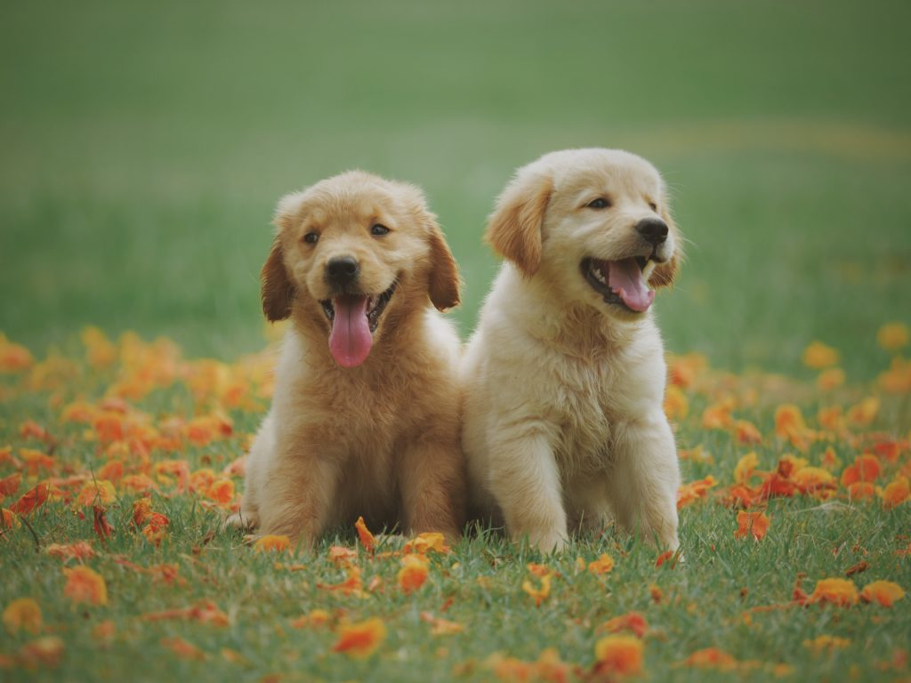 Cute puppies sitting