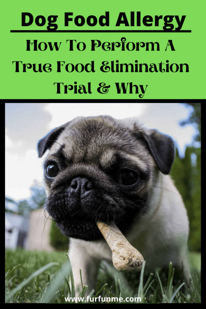 dog food trial
